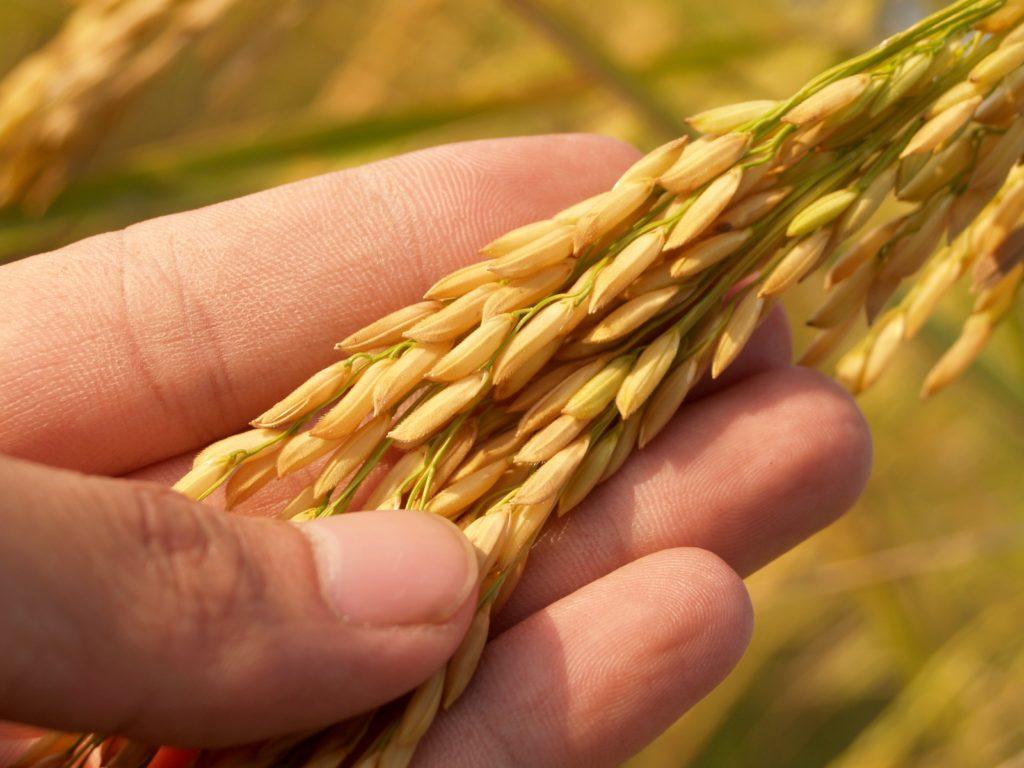 Il volto sostenibile del settore agrifood