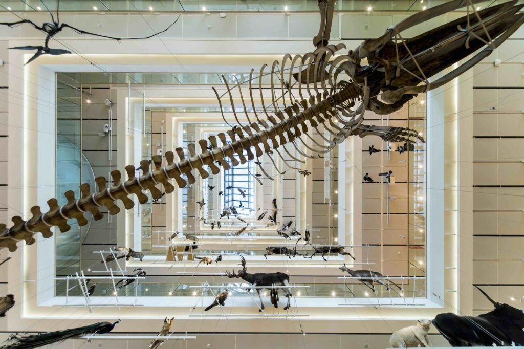 MUSE- Museo delle Scienze di Trento