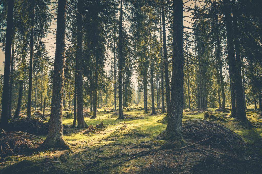 Bosco della CSR: un impegno tangibile
