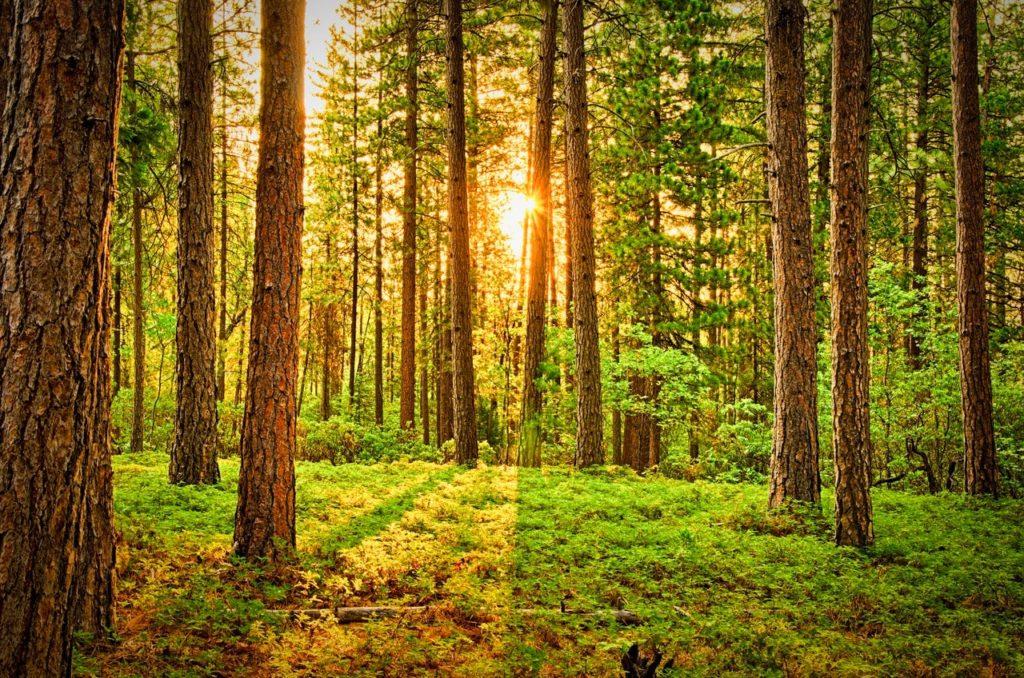 Rete Clima: la cultura della sostenibilità ambientale